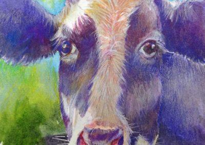 DINAN Purple Cow13