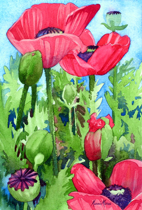 Sheilas Poppies I 10x6