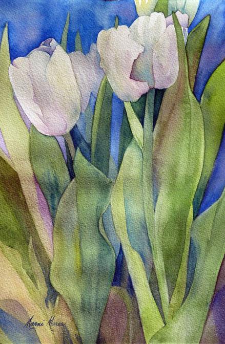 White Tulips  10x6