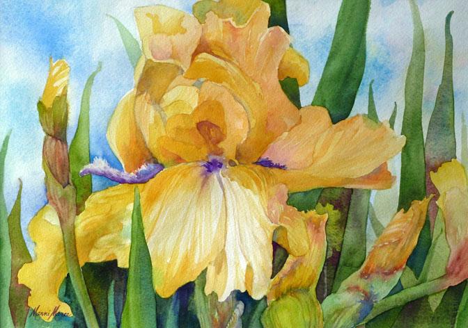 Yellow Iris 14x10