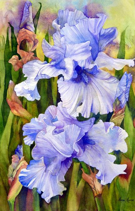 Purple Iris 22x14