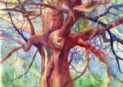 Miami Shade Tree