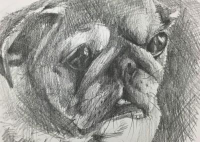 """Puggie, 6""""x6"""" graphite in a black 9x9 frame. $50"""