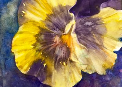 Pansy 6x6 wc unmatted and unframed
